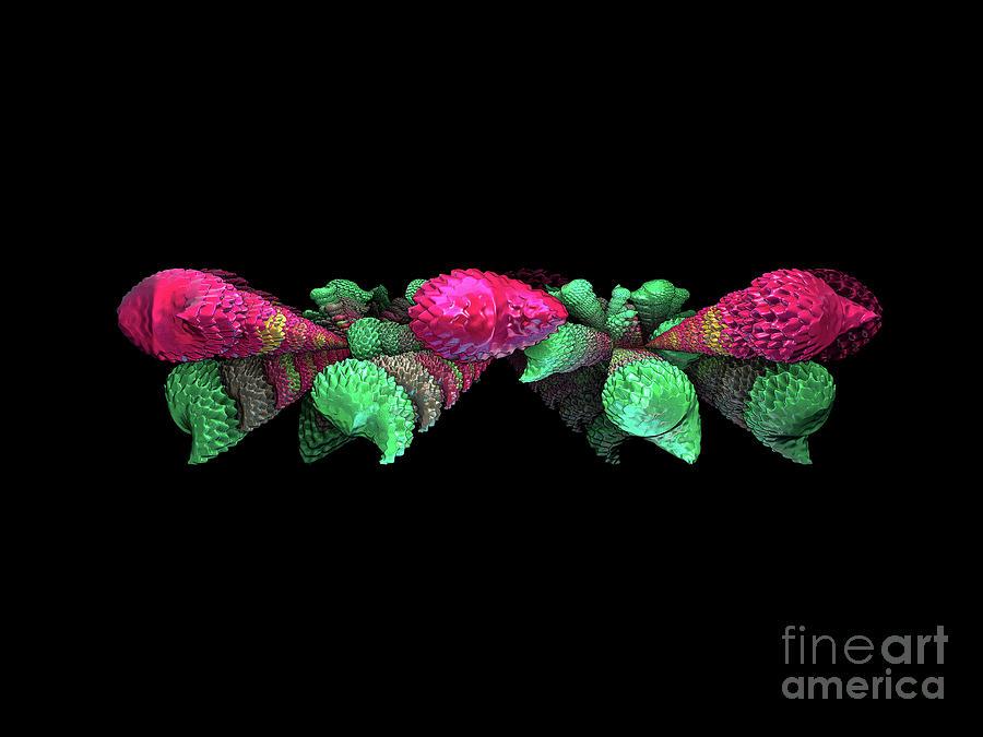 Colourful Shells Photograph