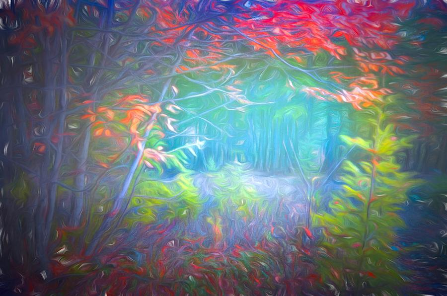 Tree Photograph - Colours In The Foggy Forest by Tara Turner