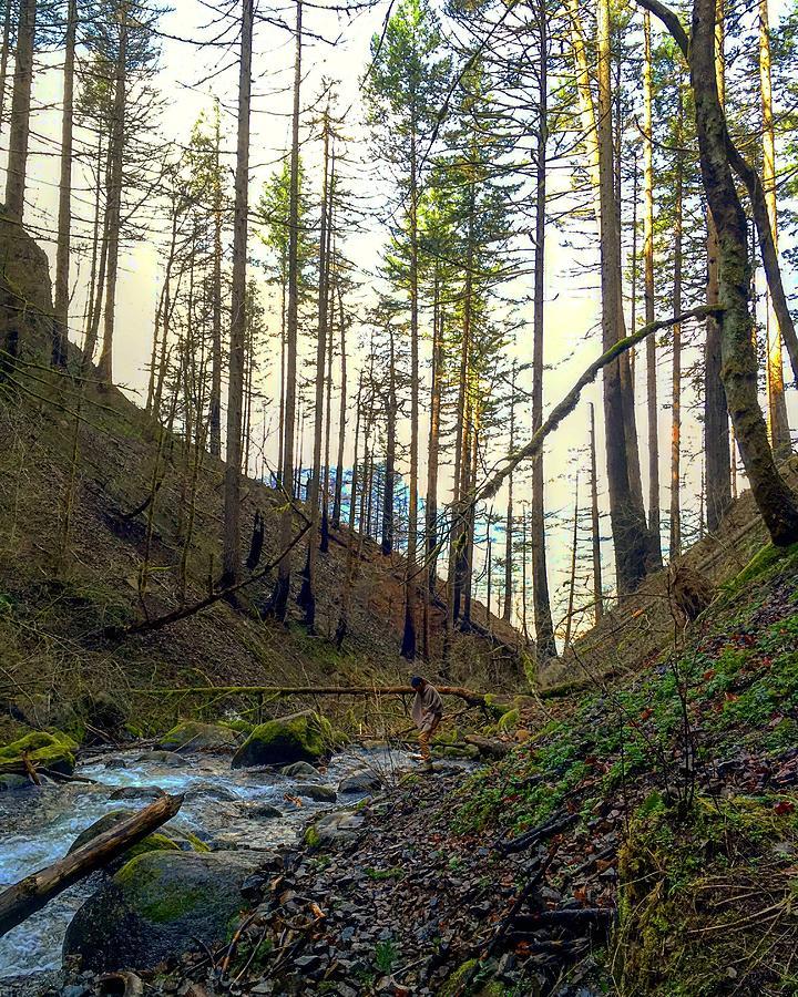 Columbia Gorge Bliss by Michael Oceanofwisdom Bidwell