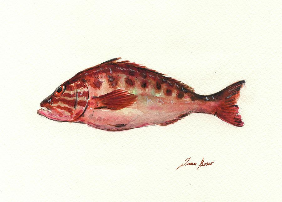 Comber Fish Painting by Juan Bosco