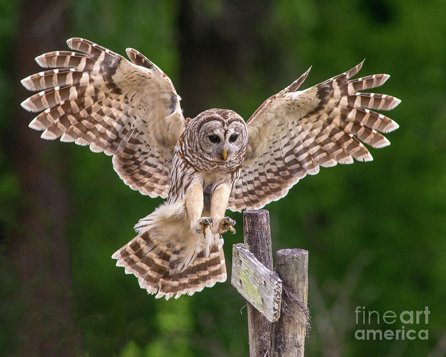 Coming in for a Landing by Jane Axman