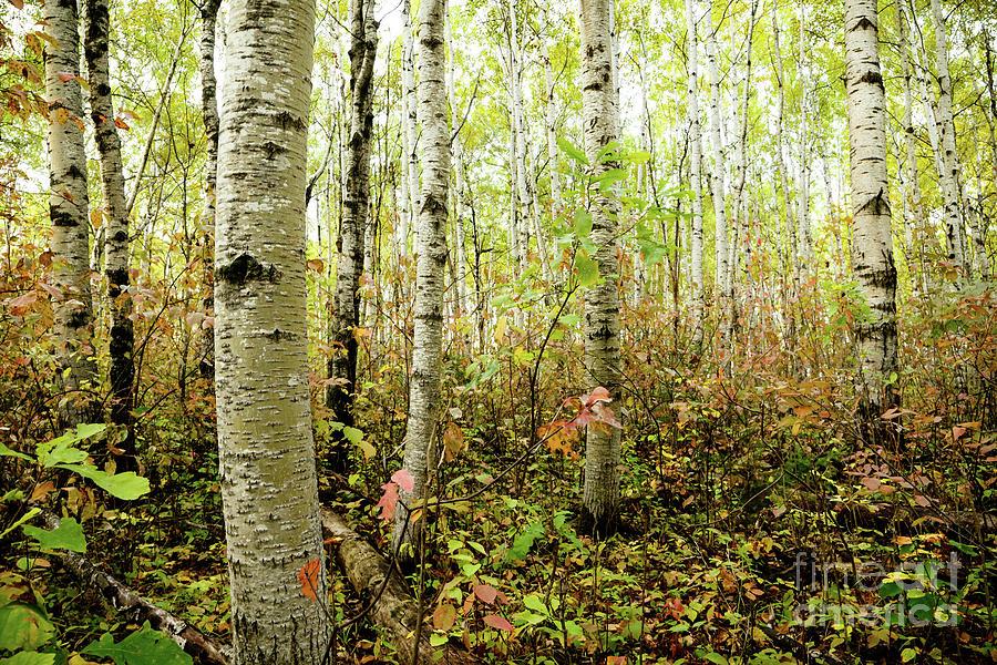 Coming of Fall by Lori Dobbs