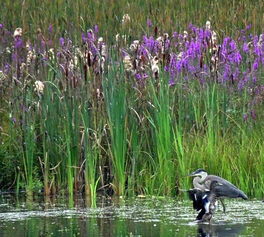 Comings And Goings On The Marsh by Catherine Arcolio