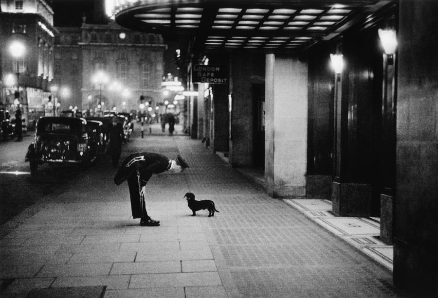 Commissionaires Dog Photograph by Kurt Hutton