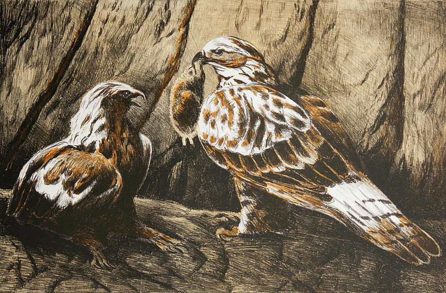 Common Buzzards with Prey by Hans Egil Saele