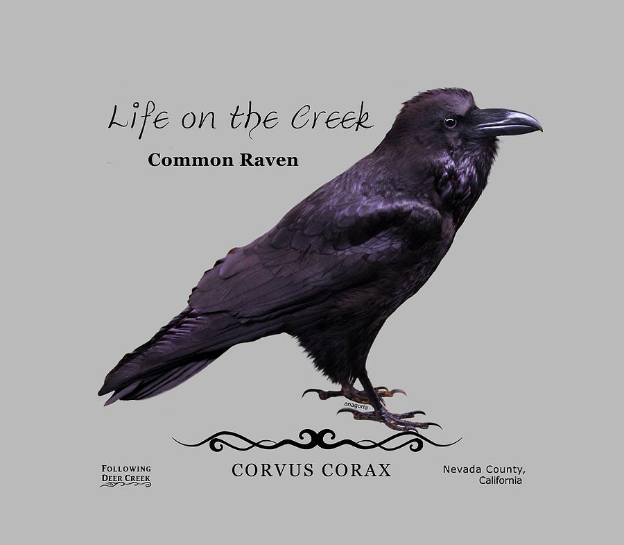 Common Raven by Lisa Redfern