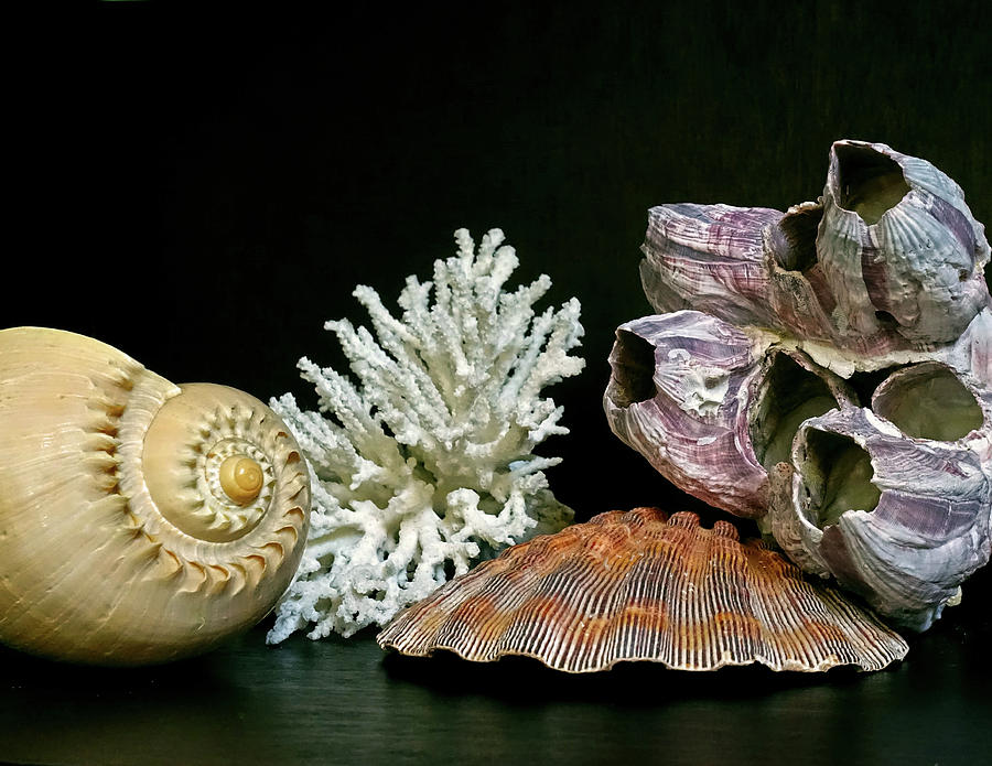Conch Coral Clam and Barnacle 4 by Lynda Lehmann