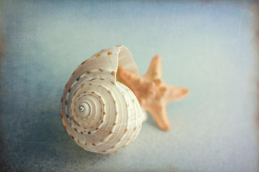 Conch Shell and Starfish by Tom Mc Nemar