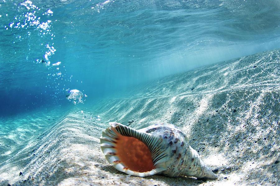 Sea Photograph - Conch Shell Bubbles by Sean Davey