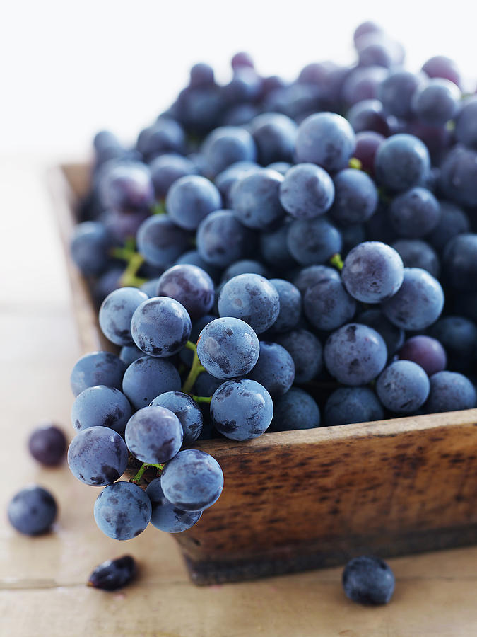 Concord Grapes Photograph by Alexandra Grablewski