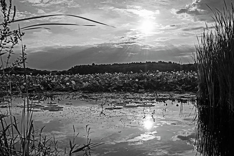 Concord MA Great Meadows Sunrise Pond Lotus Bloom Grass Black and White by Toby McGuire