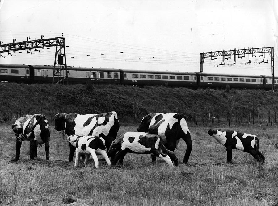 Concrete Cows Photograph by Ian Tyas