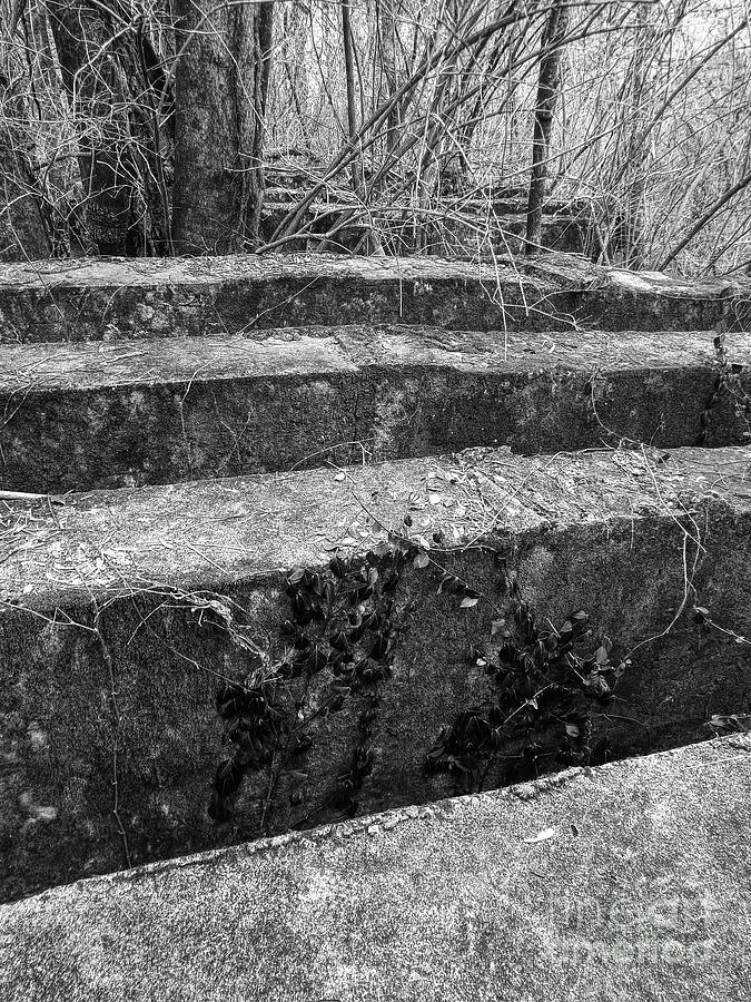 Concrete Photograph - Concrete Forest by Phil Perkins