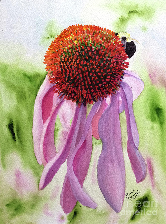 Coneflower by Bonnie Young
