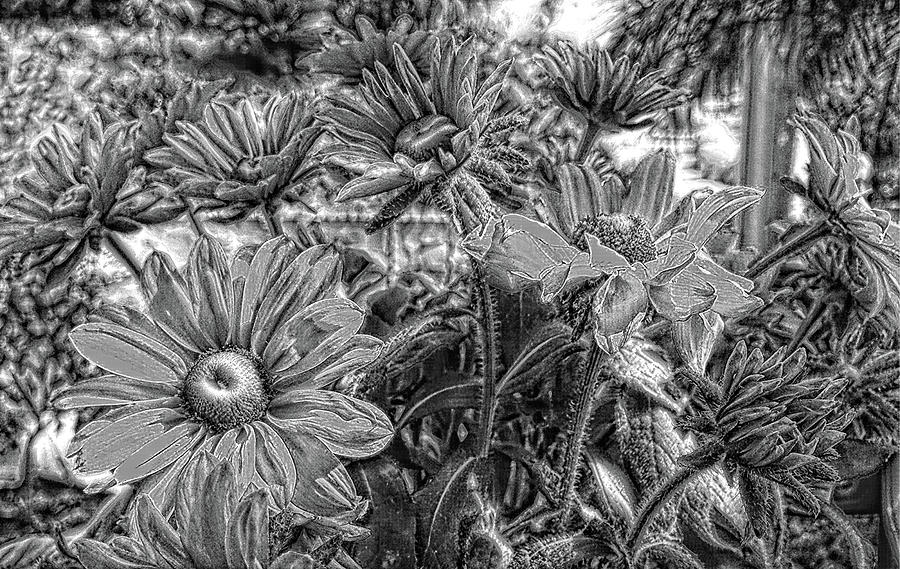 Coneflowers Pencil Sketch Painting
