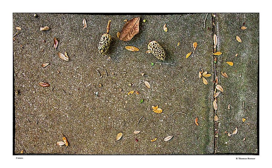 Cones by R Thomas Berner