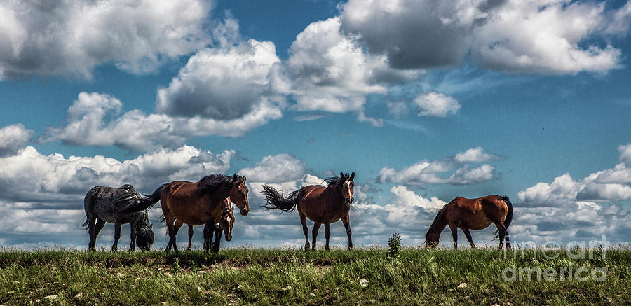 Conflab on a Hilltop - Pano by Kathy McClure
