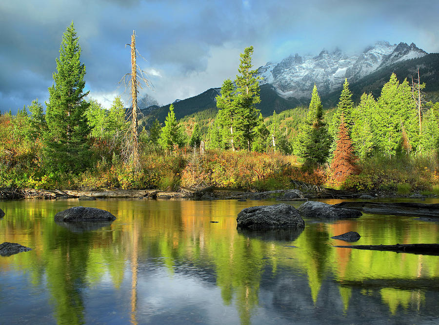 Conifers Along River, Mt Saint John, Grand Teton National Park, Wyoming by Tim Fitzharris