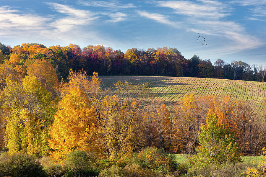 Connecticut Autumn Landscape by Bill Wakeley