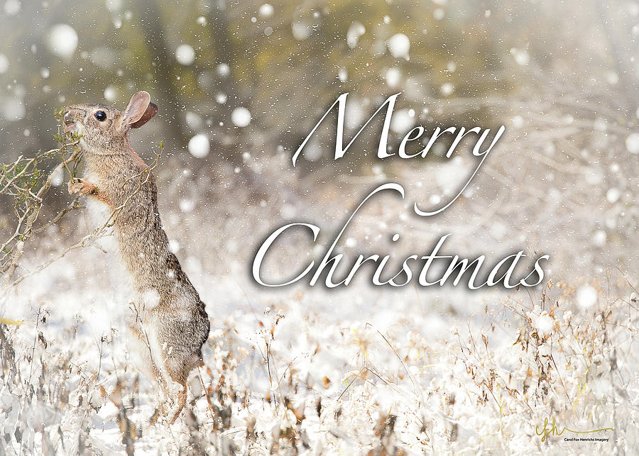 Cottontail Christmas by Carol Fox Henrichs