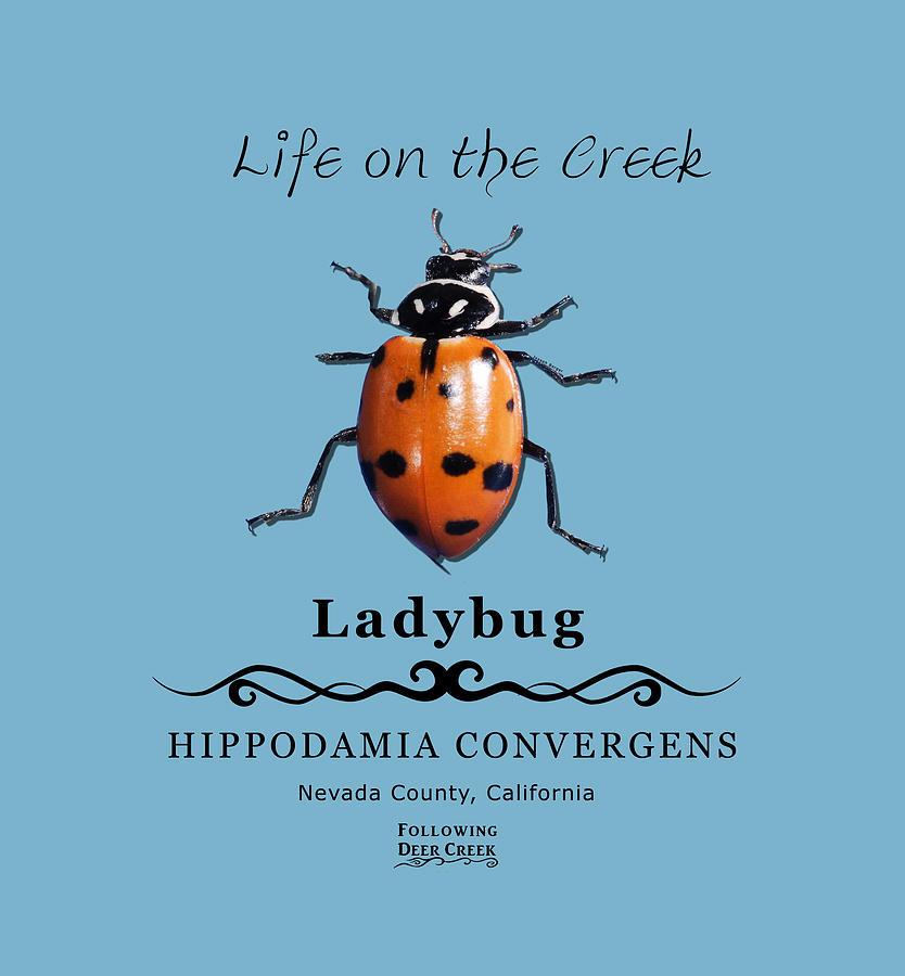 Convergens Ladybug by Lisa Redfern