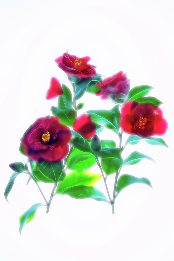 Cool Camelia by Ches Black