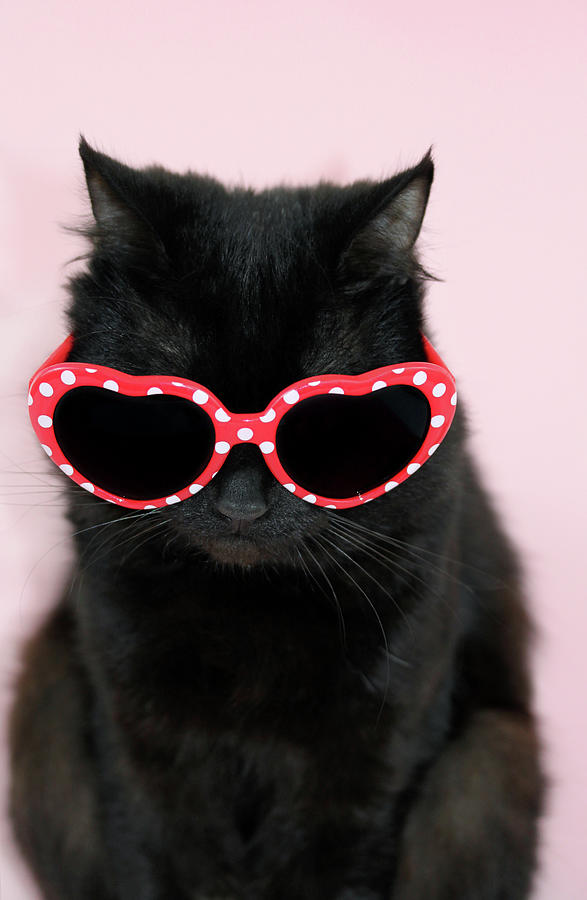 Cool Cat Wearing Sunglasses Photograph by Kelly Bowden