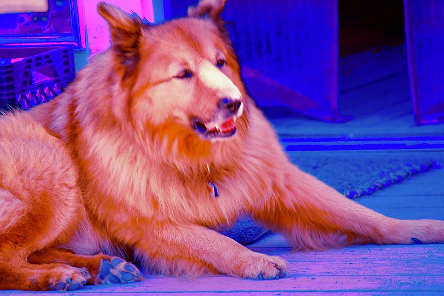 Cool Dog Photograph - Cool Dog by Debra Grace Addison