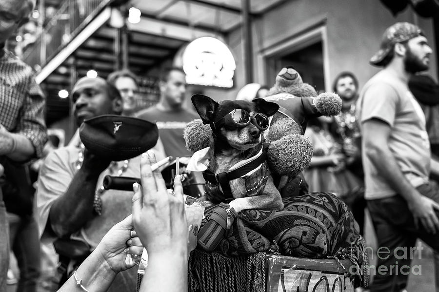 Cool Dog Photograph - Cool Dog On Bourbon Street In New Orleans by John Rizzuto