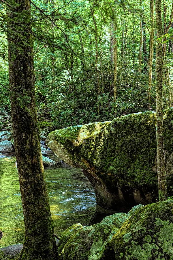 Cool Water at Mossy Rock Smokey Mountains National Park by T Lynn Dodsworth
