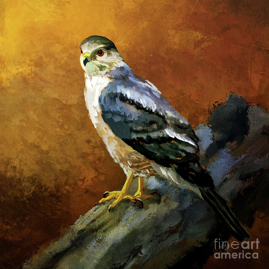 Cooper's Hawk by Lois Bryan