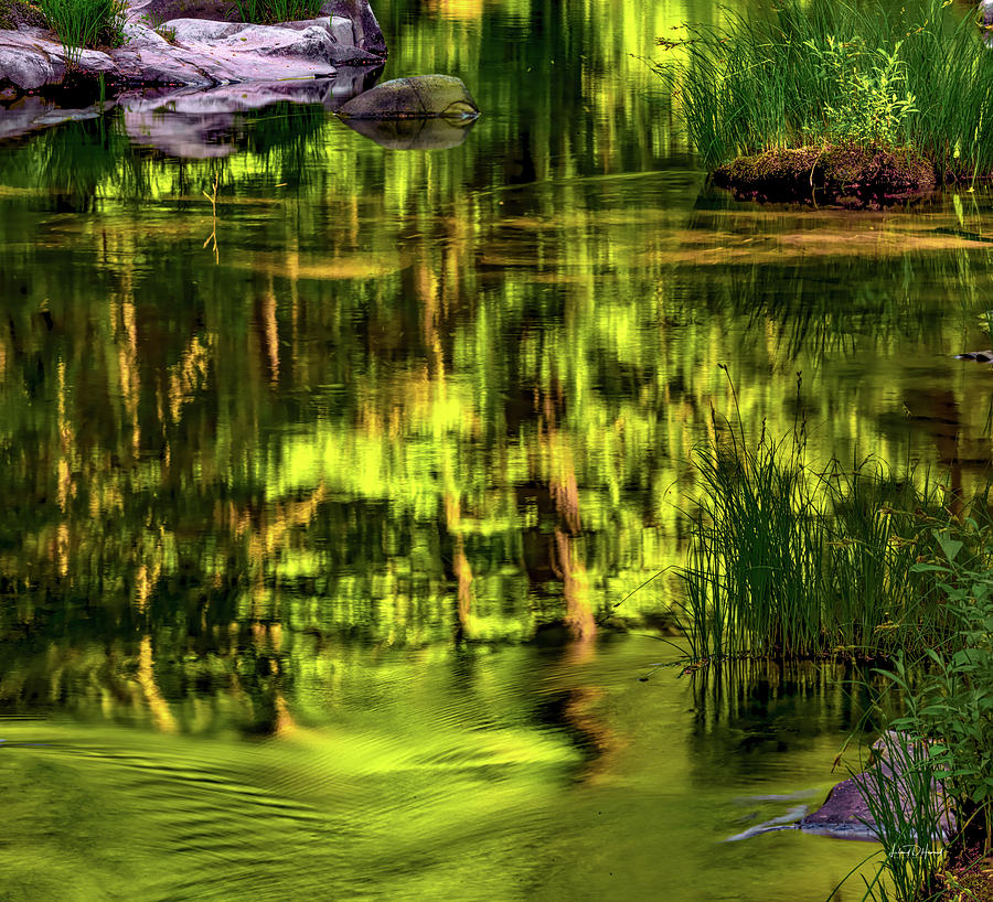 Nature Photograph - Coquille Forest Reflections by Leland D Howard