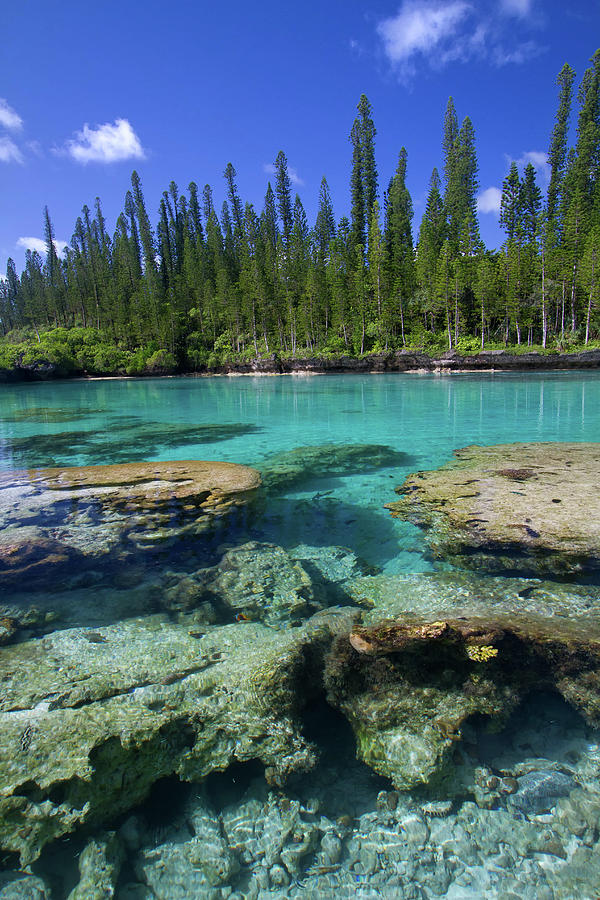 Coral And Crystal Water Photograph by Mako Photo