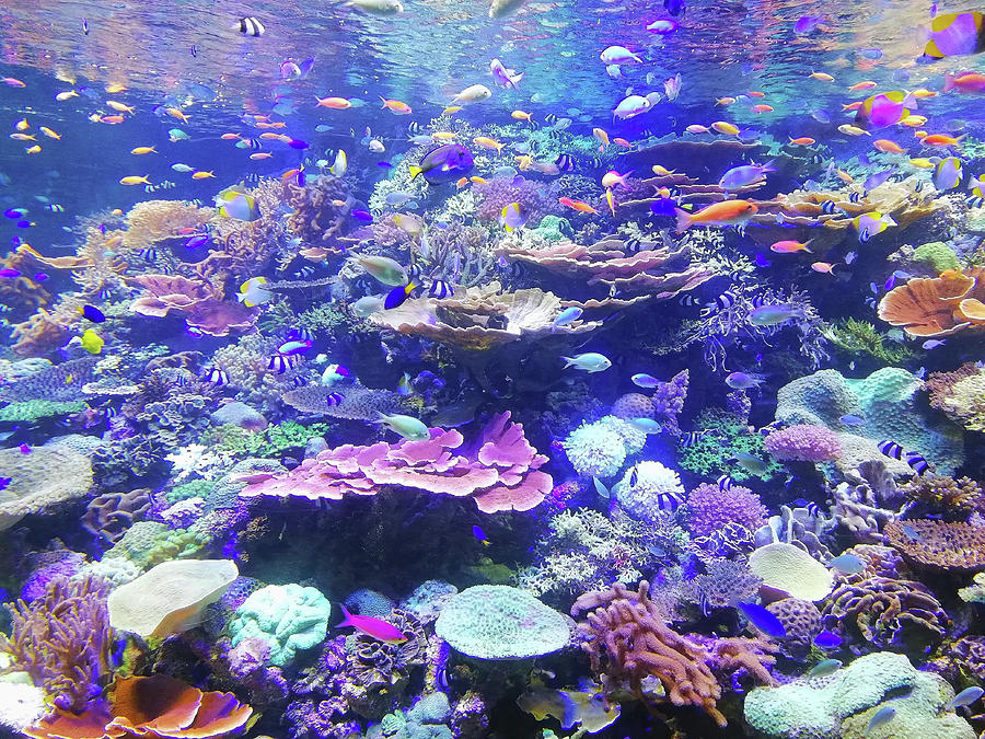 Coral and School of Fish by Carlene Smith