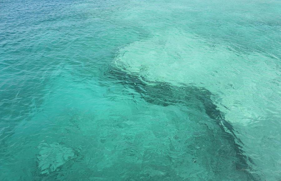 Coral Bedrock, Caribbean Sea Photograph by Douglascraig