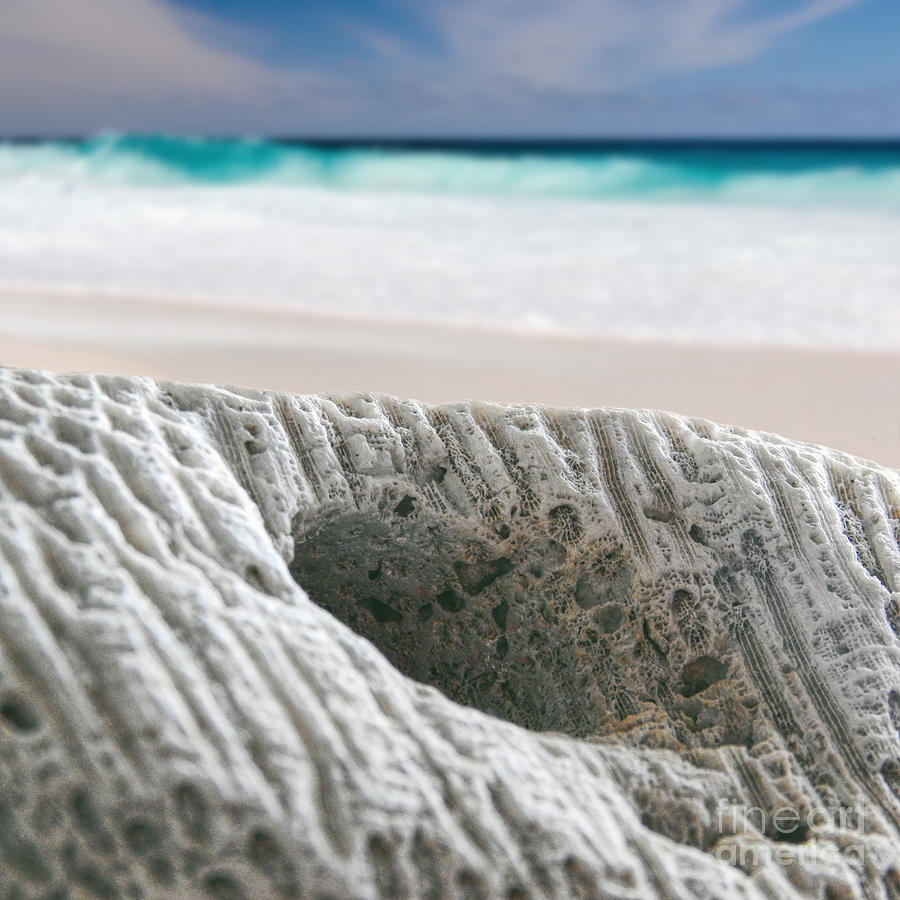 Coral Reef Photograph - Coral By The Sea by Phil Perkins