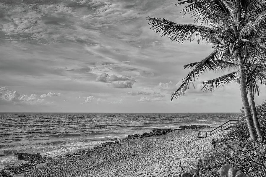 Coral Cove Palms by Steve DaPonte