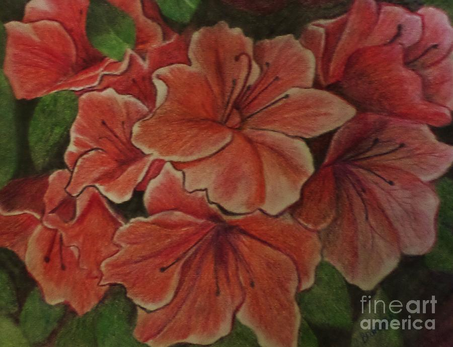 Coral Floral Hibiscus Drawing