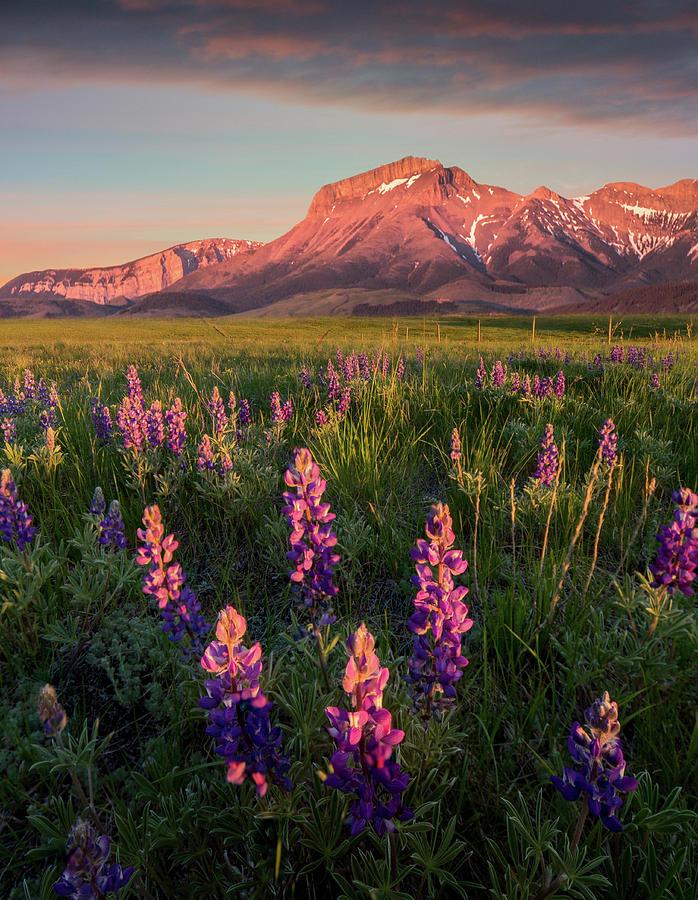 Coral Sunrise / Augusta, Montana  by Nicholas Parker