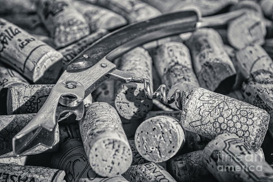 Wine Photograph - Corkscrew And Wine Corks Black And White by Stefano Senise