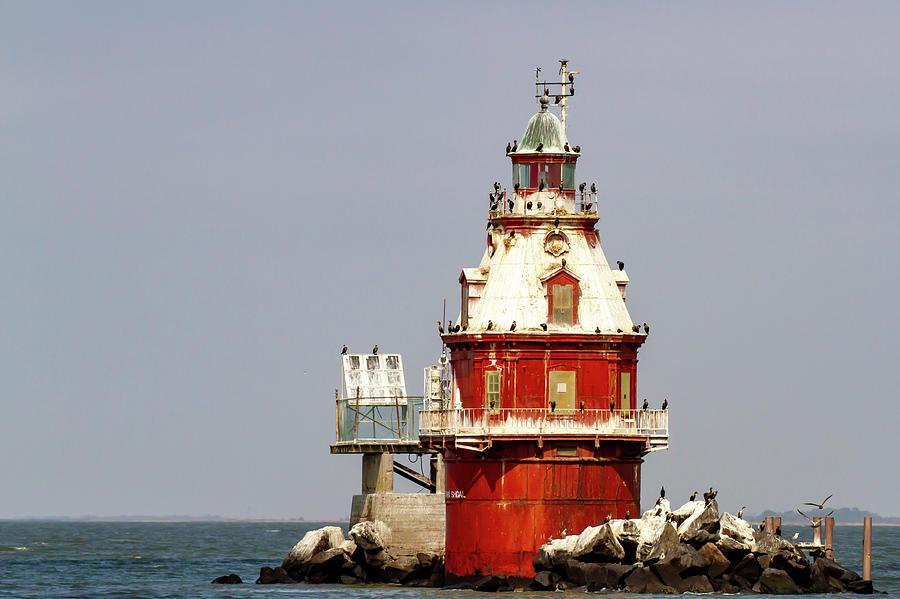 Cormorant nests on Ship John Shoal Lighthouse by Karen Foley
