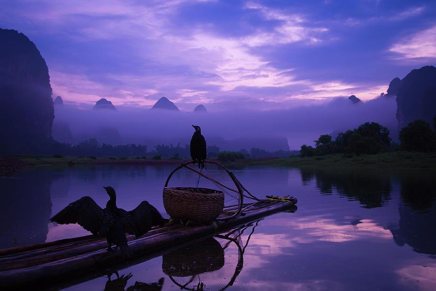Cormorant On Li River Photograph by Coffeeyu