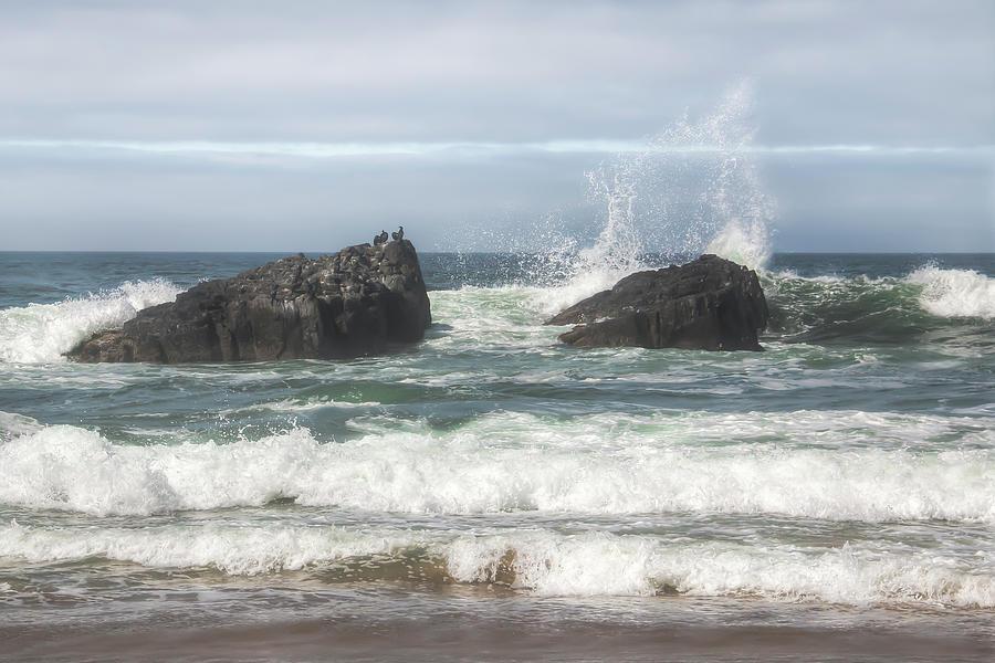 Cormorant Rock 01065 Photograph