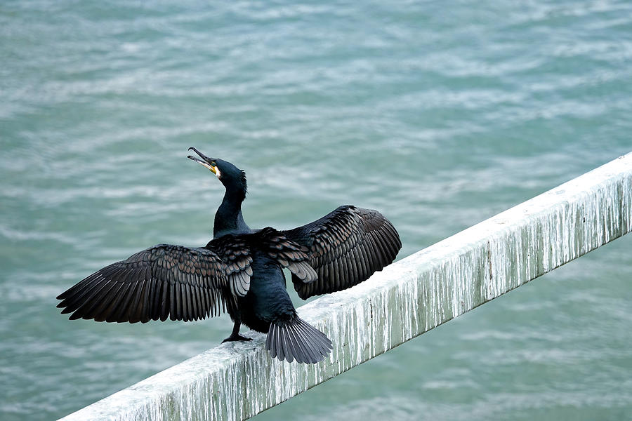 Cormorant Roosting Place by Fran Riley