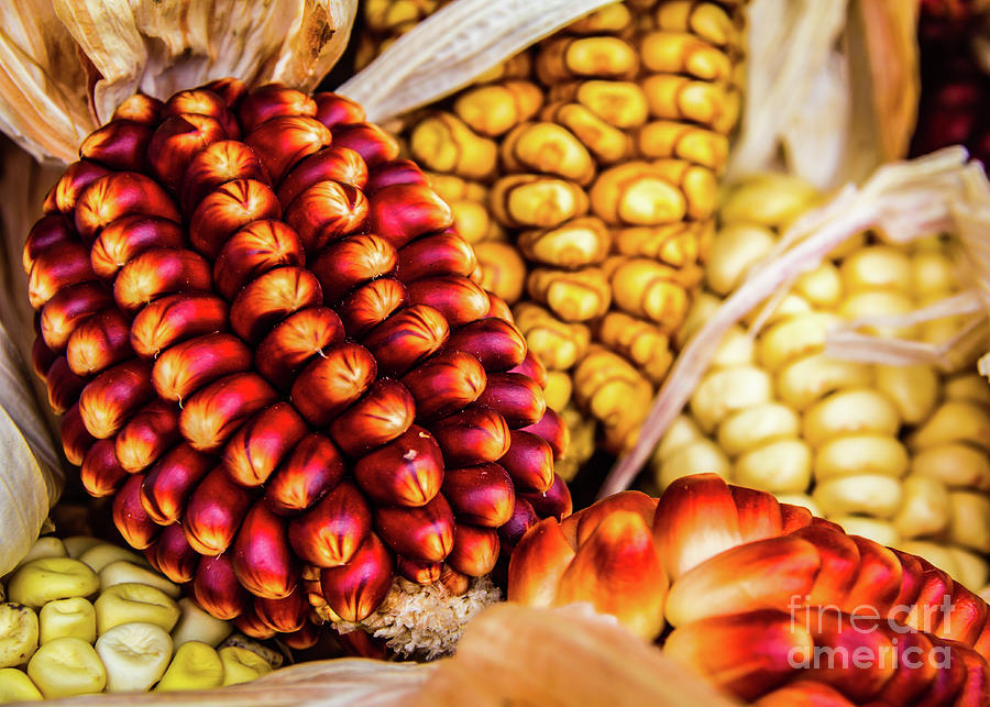 Corn cobs by Lyl Dil Creations