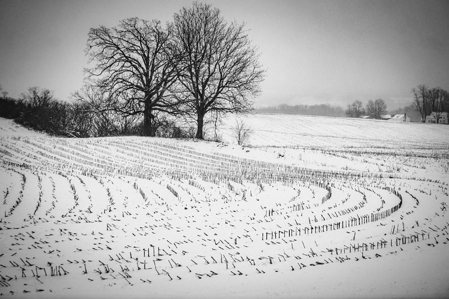 corn snow by Kendall McKernon