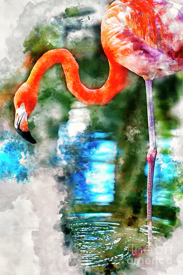 Costa Maya Flamingo by David Smith