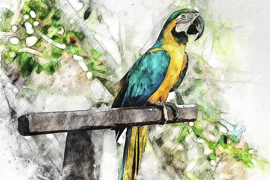 Costa Maya Macaw by David Smith