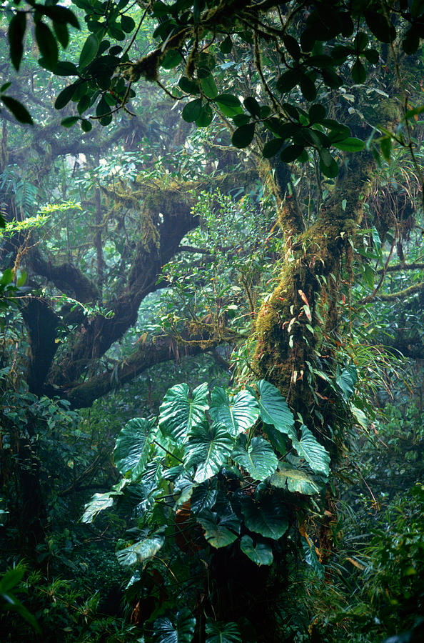 Costa Rica, Monteverde Cloud Forest Photograph by Art Wolfe
