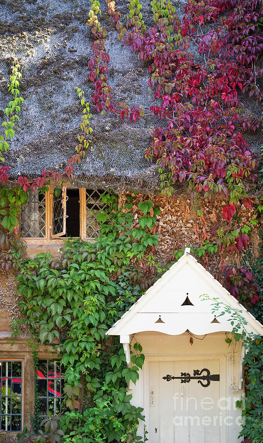 Cottage and Ivy by Tim Gainey